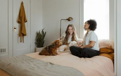 How do comforting pets help human beings?
